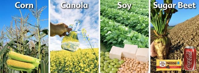 GMO-Crops-4-Canada