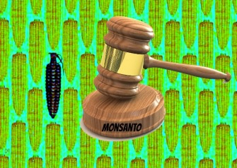 monsanto-GMO-corn-300x214