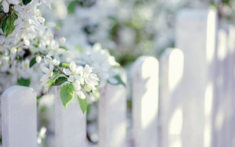 flower-white-summer-beauty-beautiful-tree-nature-wallpaper-1