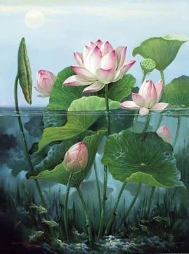 afc25664db4315b8bba0d8adddb9cc71--july-birth-flowers-lotus-flowers.jpg
