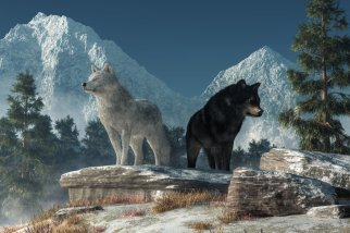 white_wolf__black_wolf_by_deskridge-dak32c7