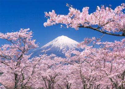 Fioritura-Ciliegi-Giappone-1